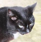 Molly cat.jpg