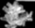 nudibranch copy.png