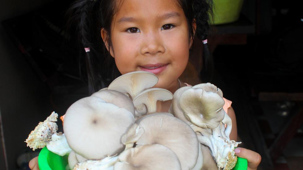 Mushrooms Bringing Joy to Jib