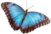 Emperor-butterfly.jpg