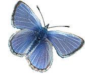 palos-blue-butterfly.jpg