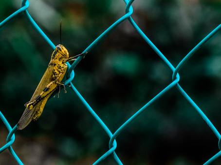 The Grasshopper Imagination