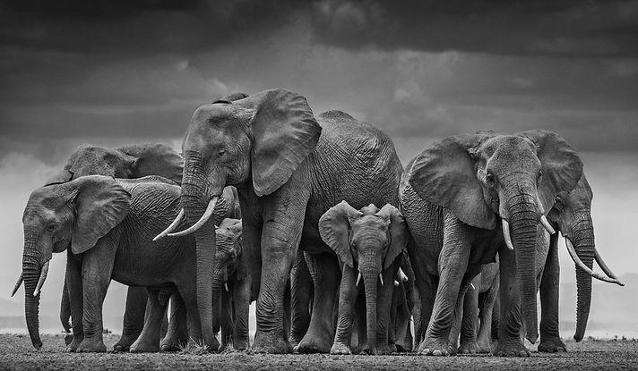 nobal elephant.jpeg