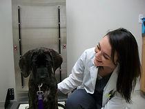 Dr. Whatley, Veterinarian