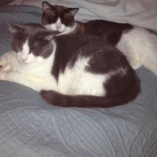 Cats_111519.jpg