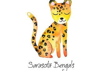 Bengal kittens for sale in Florida, Sarasota, Tampa, Naples, Bradenton, Venice, Clearwater, Orlando, Brandon, FL