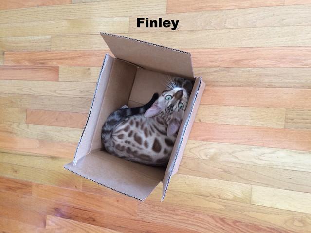 Finley-Mink snow