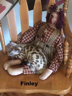 Finley- Mink snow