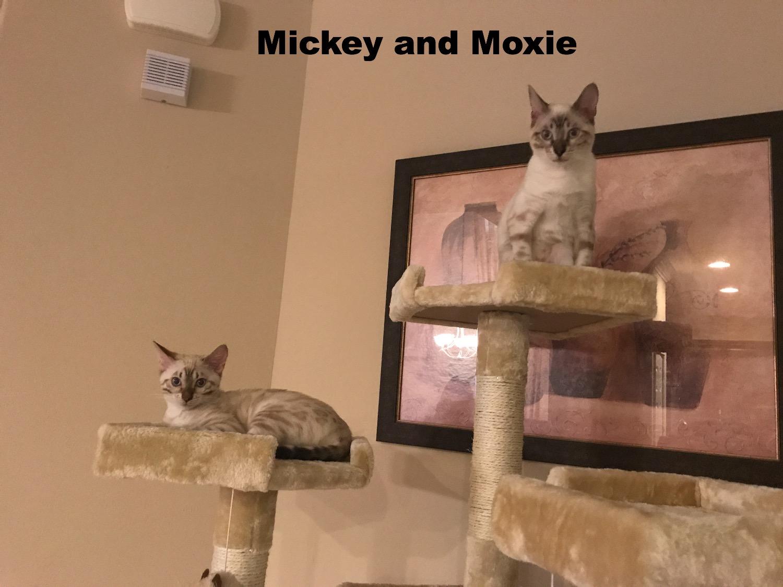 Mickey and Moxie- Lynx snow