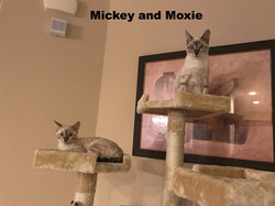 Mickey and Moxie- Lynx snow