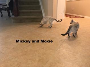 Mickey-Lynx snow