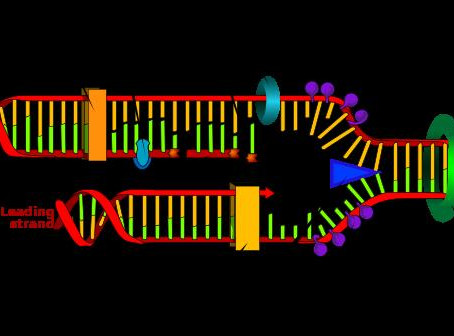 Year Ten Science: Degeneracy, Universality and RNA