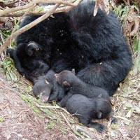Year Ten Science: Hibernation