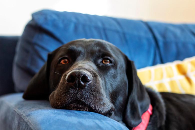 Alfie, 14.2.19, photo 2 - Rachel Dunford