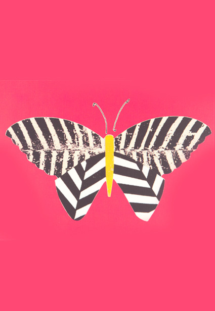 Butterfly with zebra stripes on a pink background