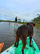 surfing lessons paddleboard shark fishing cape san blas