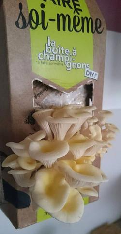 boite a champignons-pretty-little-kitchen_edited