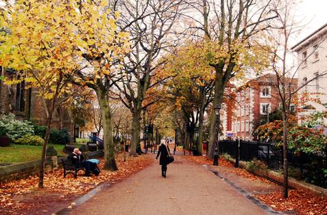 street-trees---DncnH-via-flickr.jpg