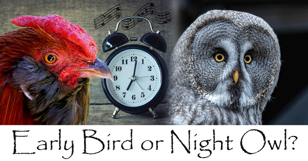 """Chicken, alarm clock, and owl with text """"Early Bird or Night Owl?"""""""