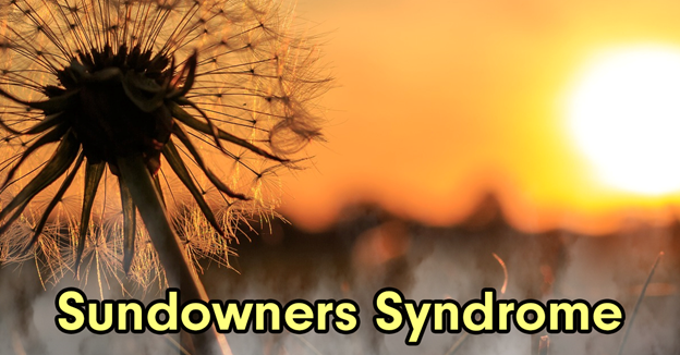 """A dandelion with a sunset in the background with text """"Sundowners Syndrome"""""""