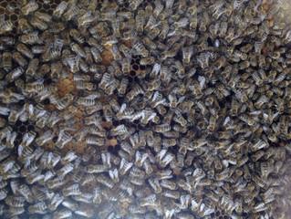 Naše včely, Náš med