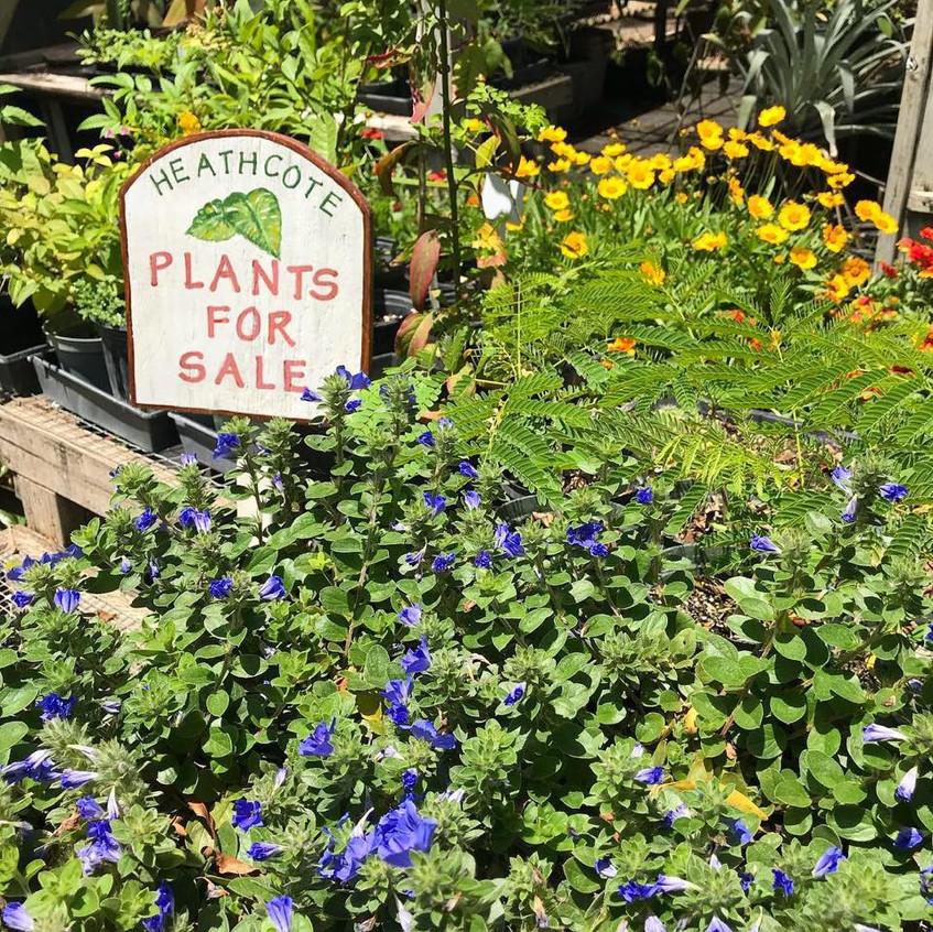 Heathcote Plant Sale
