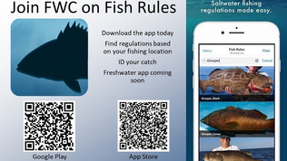 Caught a Fish? There's an App for That.