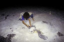 Archie_Carr_National_Wildlife_Refuge,_FL
