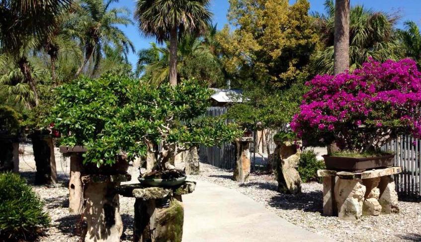 Heathcote Bonsai Garden