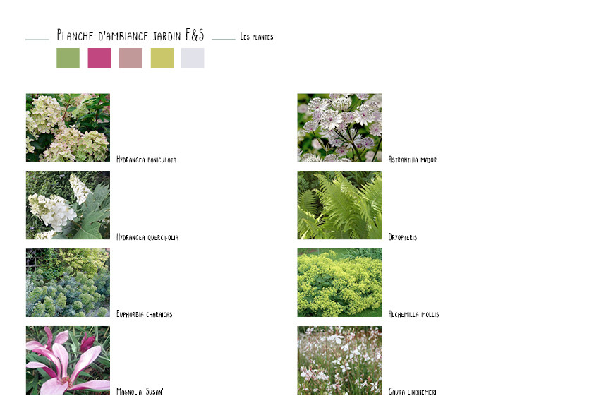 Quelques plantes