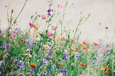 wild flowers photo.jpg