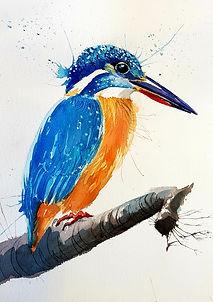 still kingfisher.jpg