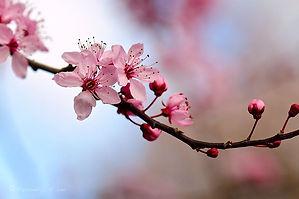 blossom still.jpg