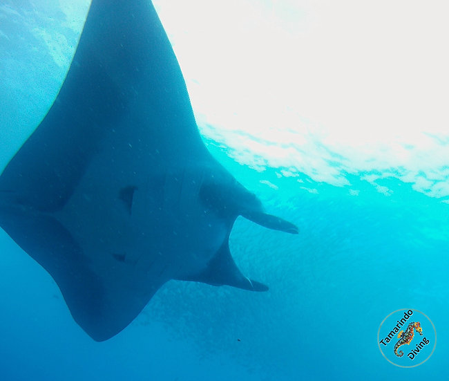 HALF DAY DIVING Catalinas Islands Certified Persons