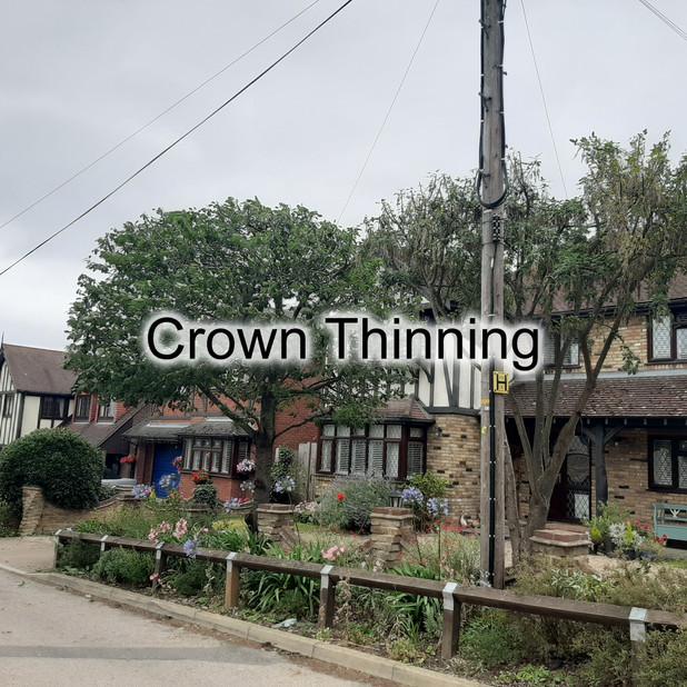 Crown Thinning 2.jpg