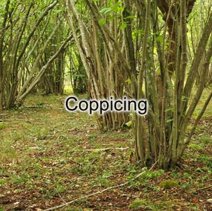 Coppicing.jpg