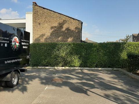 Hedge 2.jpg