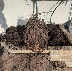 Palm Stump Removal (2).jpg