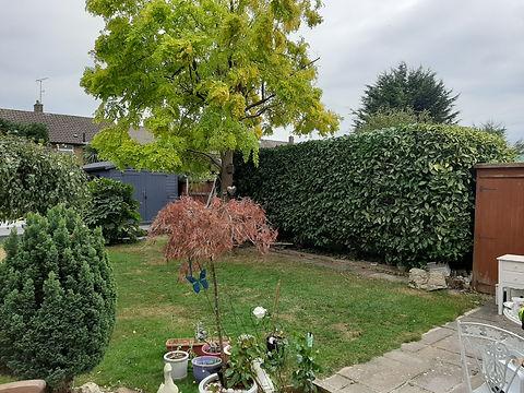 Hedge 1.jpg