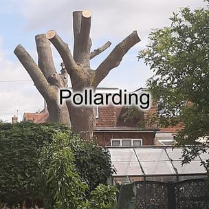 Pollard.jpg