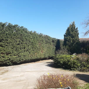 Back in March, the team undertook a 4 day conifer hedge reduction and trimming job for a local client. The hedge was approx. 114m (374ft)!! in length and run continuously from the front boundary, zigzagging all the way through to the rear boundary! The client and neighbouring properties required as much to be reduced in height as possible, light had been drastically reduced over the years. The team was mor than happy to help and get started. The client and neighbours were very happy with the end results, as were the team.