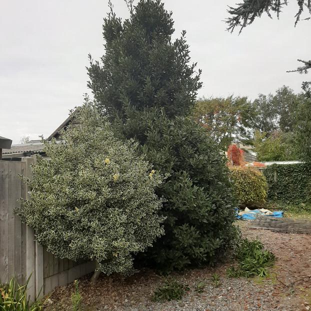 Garden Maintenance (3).jpg