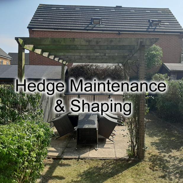 Hedge Maintenance.jpg