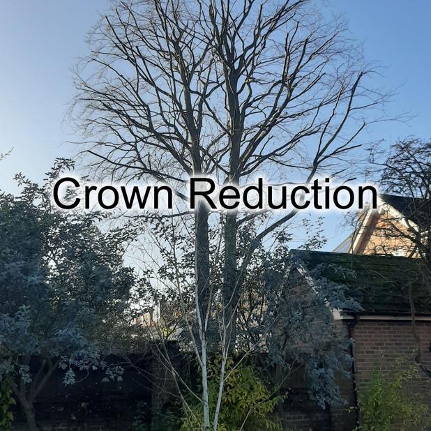 Crown Reduction.jpg
