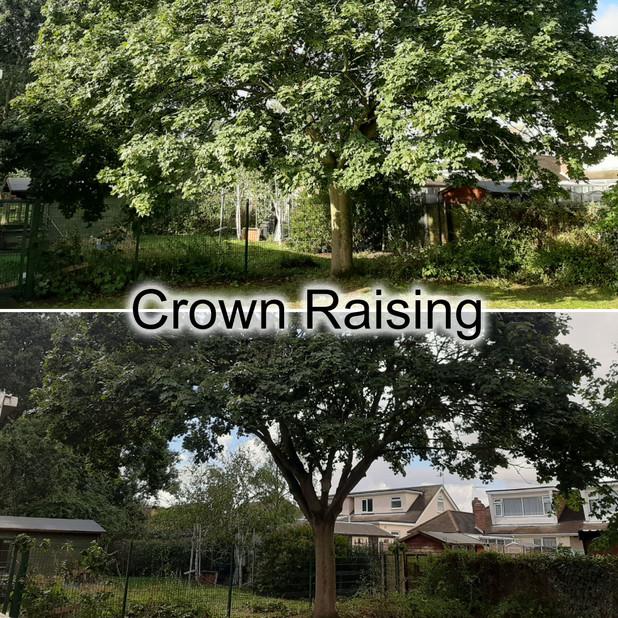 Crown Raising.jpg