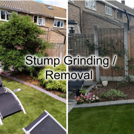 Stump Gringin Removal.jpg