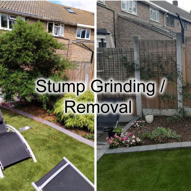 Stump Gringin Removal.jpg