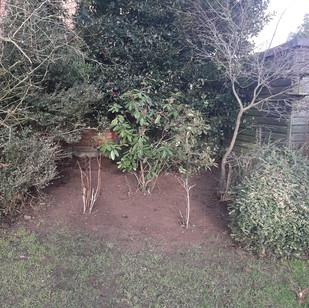Planting (8).jpg