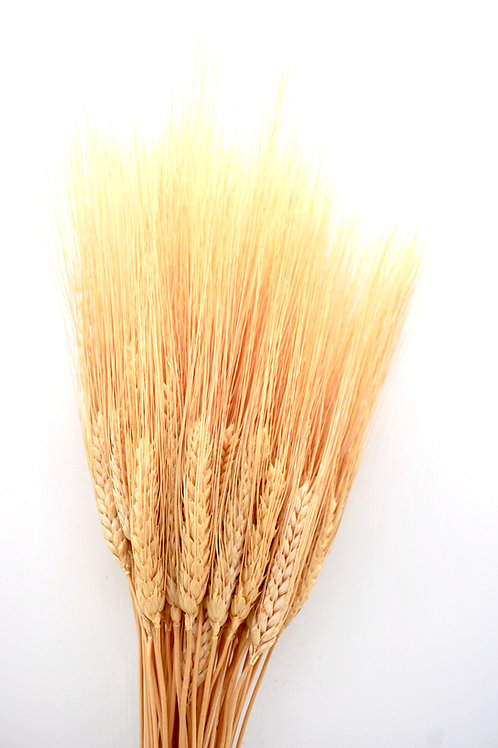Wheat- Natural