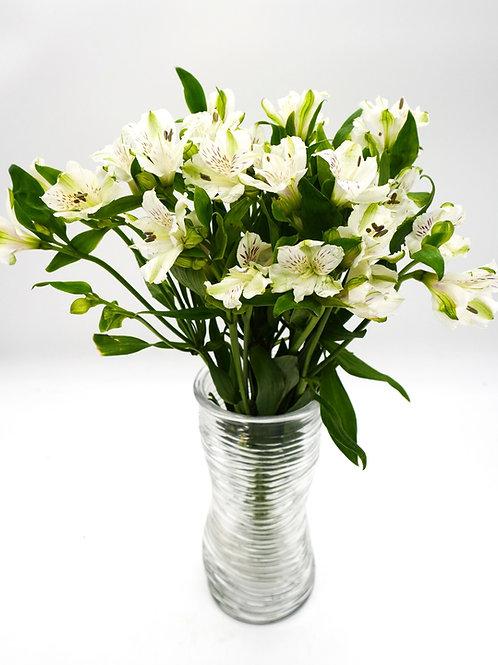 Alstroemeria- White